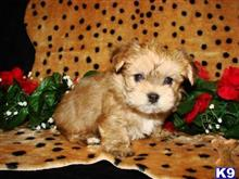 mixed breed puppy posted by BeautifulPuppies