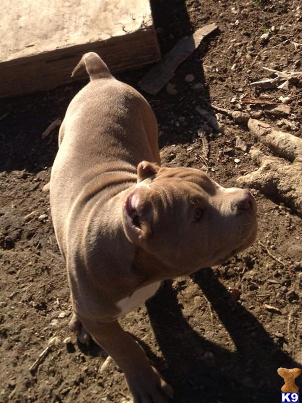 Puppy is nice and healthy eating hard food ready  14 Months $1,200