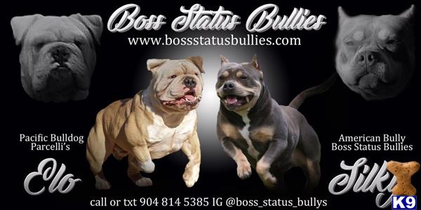 Bossstatusbullies Picture 2