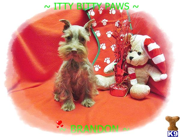 IttyBittyPaws Picture 1