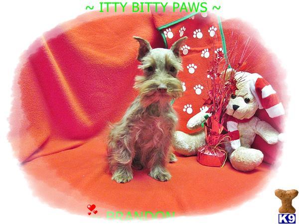 IttyBittyPaws Picture 2