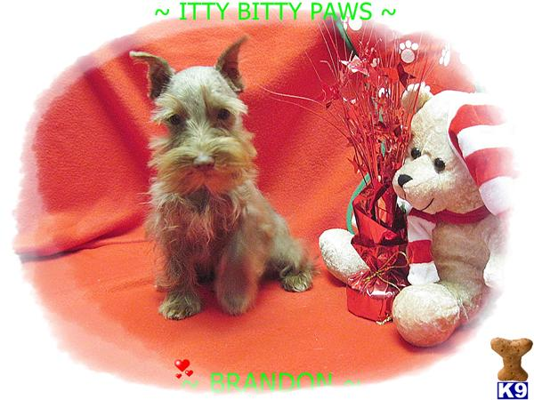 IttyBittyPaws Picture 3