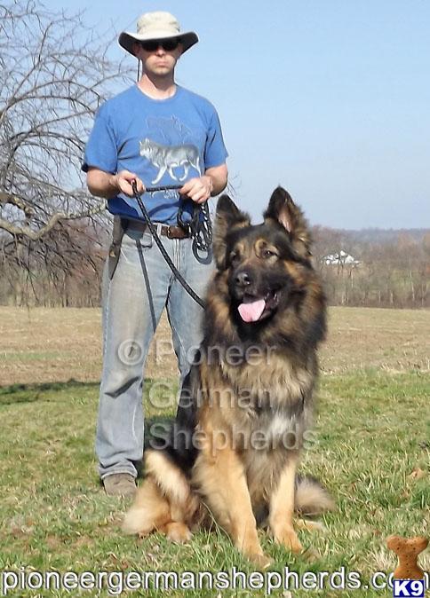 Large Single Coat Dog Breeds