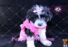 mixed breed puppy posted by PuppyHeaven1