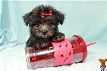 mixed breed puppy posted by PuppyHeavenLV
