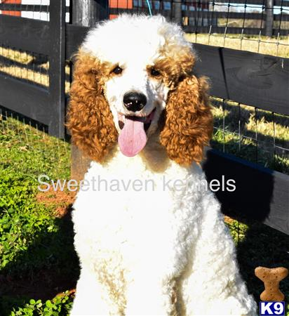 Sweethaven Kennels Picture 1