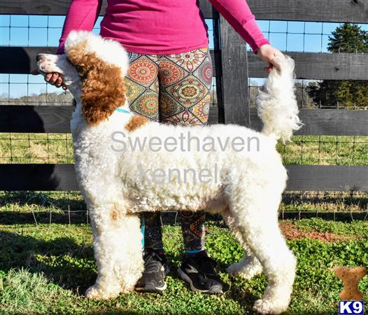 Sweethaven Kennels Picture 2