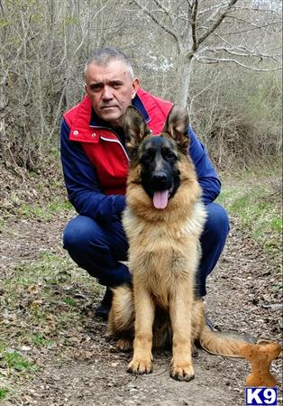 blueridgelanegsd Picture 3