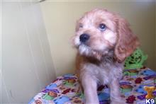 mixed breed puppy posted by dandg