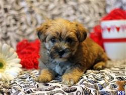 mixed breed puppy posted by designerpups