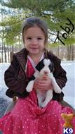 english springer spaniel puppy posted by kenste
