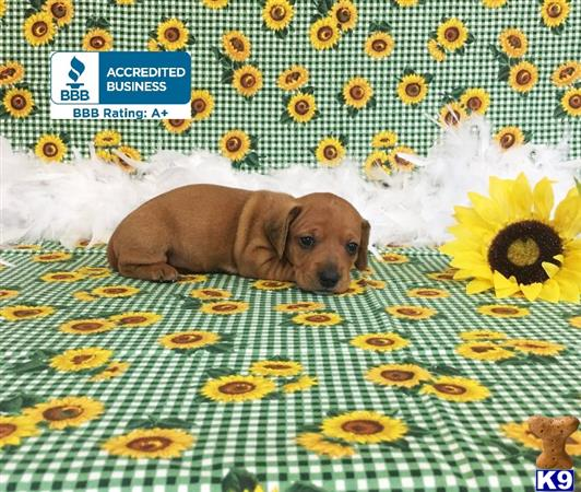 little paws kennel Picture 1