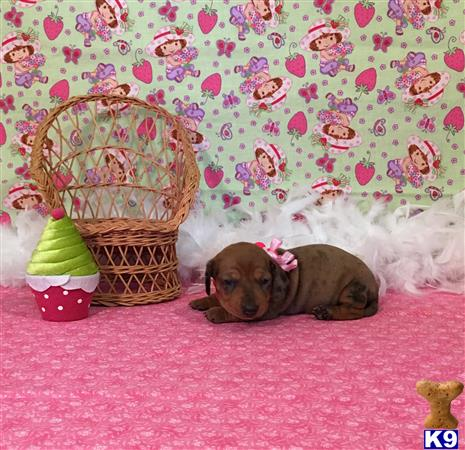 little paws kennel Picture 2