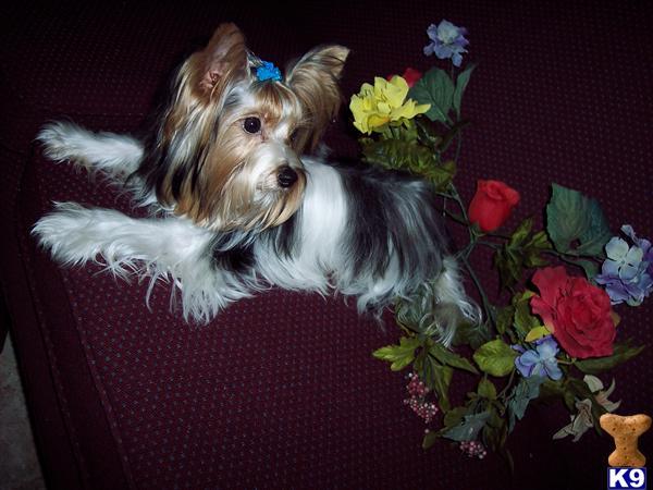 Saputnici – Priča o psima Lopez3061@roadrunner.com_A201112011331
