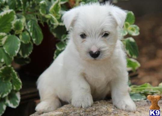 Mixed Breed Dogs For Sale Denver