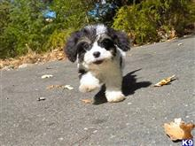 mixed breed puppy posted by norcalpup