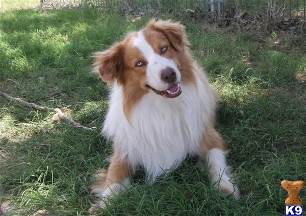 Hondo Dog Breed