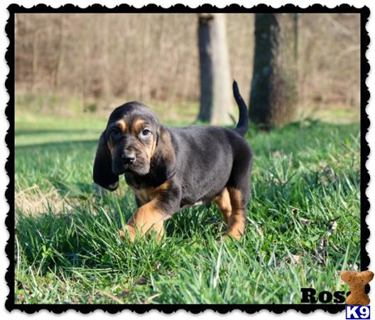 rockyhillkennel Picture 1