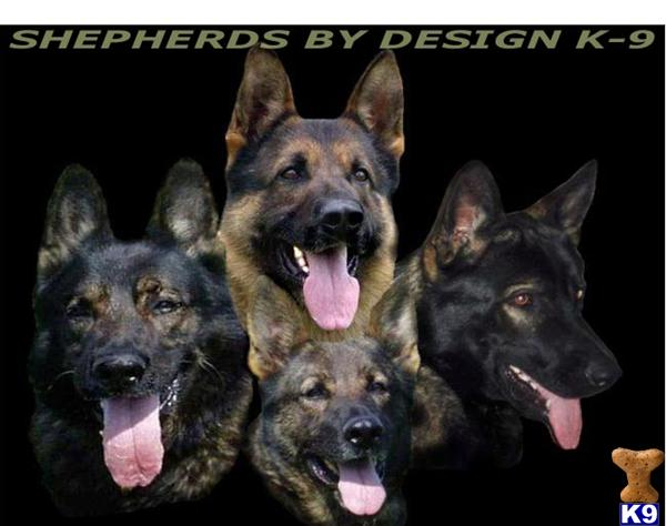 shepherds by design Picture 1