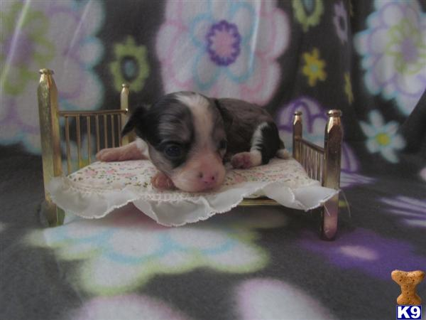 thepuppyworld Picture 3