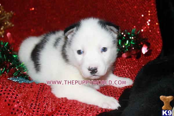 thepuppyworld Picture 1