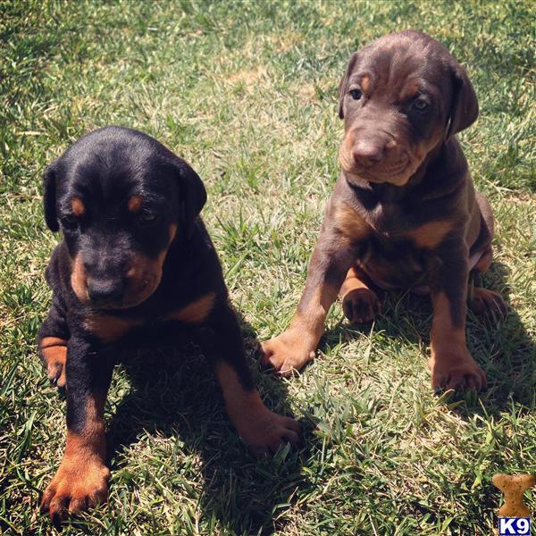 Dog Obedience Training Watsonville