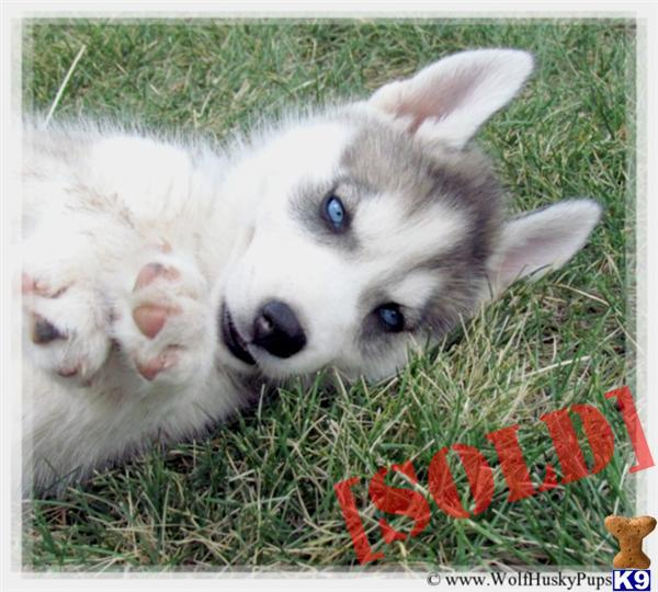 Southern Oregon Dog Adoption